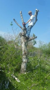 residential tree trimming in Corpus christi