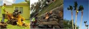 stump grinding services in corpus christi texas