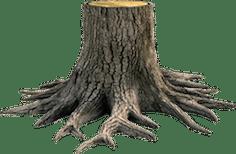 stump removal in corpus christi