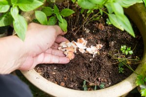 crushed egg in organic fertilizer tree service