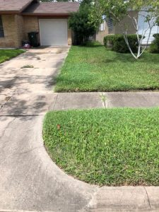 This is a picture of well trimmed and manicured saint augustine grass after being freshly cut